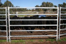 Corral Panels - Temporary Livestock Fencing of Horses, Cattle & Sheep Cattle Panel Fence, Cattle Panels, Wild Animals Attack, Animal Attack, Mesh Fencing, Horse Fencing, Sheep Fence, Cattle Corrals, Field Fence