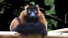 Вы кто такие? Идите на ##й, я вас не знаю  #животные #взгляд #прикол