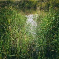 Hovells Creek 4: Vantage (2017).  Lara, Vic. Australia. Words & Image: © Gary Light (2017). Creative Commons: (CC BY-NC-ND4.0).  #photography #landscape #art #victoria #australia #abstract #hovellscreek