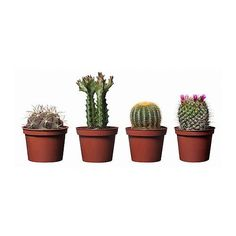 Little potted plants from Ikea...wouldn't they make the cutest favors/placecard holders?!