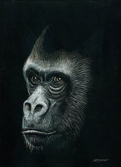 Backward Glance by Heather A. Mitchell Scratchboard ~ 10 x 8 Animal Paintings, Animal Drawings, Art Drawings, Scratchboard Art, Doodle Inspiration, White Charcoal, India Ink, Realistic Drawings, Wildlife Art