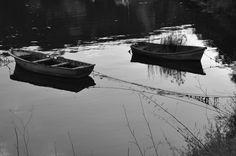 Barcas Nikon, digital