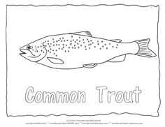 Common Trout Coloring Page Brown Pictures For Fish Pages