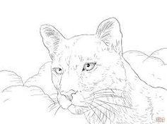 puma and cougar coloring pages printable puma and cougar coloring