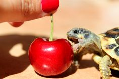And there's no harm in treating yourself, either. | 20 Life Lessons We Can Learn From Turtles And Tortoises