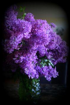 """Lilac Bouquet"" artist #Kay Novy, kkphoto1.    LIMITED TIME PROMOTION:  http://fineartamerica.com/weeklypromotion.html?promotionid=129129"