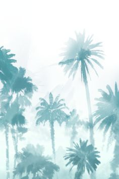 iphone-4-palm-trees-almost-makes-perfect.png 640×960 pixels