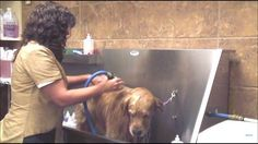 A step by step pictorial guide to washing your dog at home