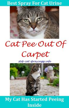 53 Best Stop Cats From Spraying Images On Pinterest Cats