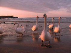 Sunset on Baltic Sea, Kolobrzeg, Poland.