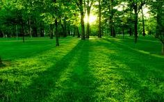 Charming gathering of lovely garden trees an abundant nature greenery HD picture of worth millions. Top one in beautiful nature HD pictures. Hd Wallpapers For Pc, Hd Nature Wallpapers, Widescreen Wallpaper, Wallpaper Pc, Computer Wallpaper, Wallpaper Backgrounds, Sunrise Wallpaper, Spring Wallpaper, Trendy Wallpaper