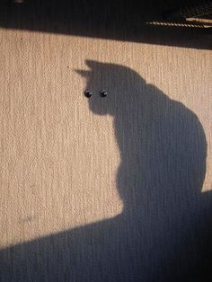Perfectly Timed Shadow