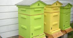 Leygonie Apiculture : matériel apicole pour la protection des ruches