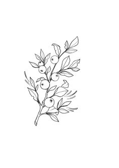 62 new Ideas for tattoo designs drawings sketches doodles Botanical Line Drawing, Floral Drawing, Botanical Art, Drawing Flowers, Tattoo Flowers, Doodle Tattoo, Tattoo Drawings, Art Drawings, Fruit Sketch