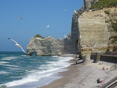 Etretat cliffs with flying seagulls.
