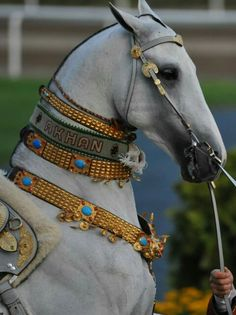 Akhal-Teke w achievement neck bands. Most Beautiful Horses, All The Pretty Horses, Animals Beautiful, Akhal Teke Horses, Friesian, Rare Horse Breeds, Rare Horses, Horse Costumes, Animal Jam