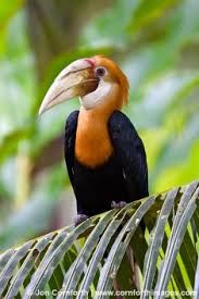 Image result for wingless bird