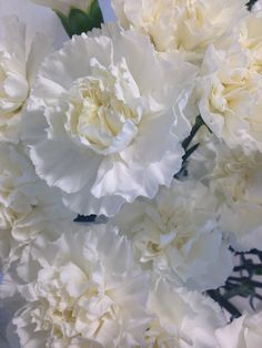 Hvit nellik - Dianthus Coconut Flakes, Rose, Flowers, Pictures, Pink, Roses, Royal Icing Flowers, Flower, Florals