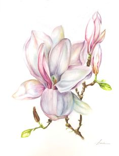magnolia cm watercolour www. Fabric Painting, Watercolour Painting, Watercolor Flowers, Watercolors, Botanical Drawings, Botanical Prints, Art Floral, Flor Magnolia, Rosa Pink