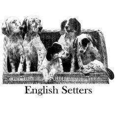 English Setter Pups Vintage Sticky Notes by jillyjaxpetart