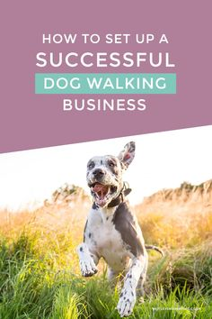 How To Set Up A Successful Dog Walking Business by Mutley's Marketing | Website Design & Branding For Pet Businesses