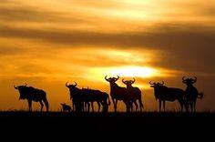 Grounds of the Sayari Camp, Serengeti National Park, Tanzania