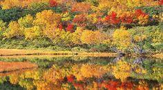 Shodoshima Japan Fall Foliage