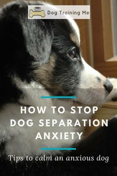 Learn how to stop dog separation anxiety starting today. Find out what's making your dog anxious, how to recognize the symptoms, and what you need to do to stop separation anxiety for good. Give your anxious dog comfort today by reading our article. #dogseparationanxiety #separationanxietyindogs #doghealth #dogtraining