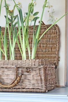 Baskets for Spring display Wicker Hamper, Rattan Basket, Picnic Baskets, Decorating Tips, Interior Decorating, Vibeke Design, Basket Planters, Planting Bulbs, Basket Decoration