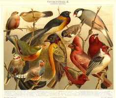 Antique vintage bird drawings