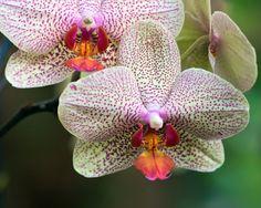 beeeyooouuutiful orchids.