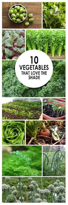 Vegetables, vegetable garden, shade vegetables, gardening 101, popular pin, gardening hacks, gardening tips.