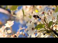 🌷 Richard Clayderman - Mariage d'Amour 🌷 - YouTube