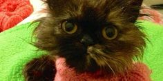 Abused Kitty surviving thanks to sweaters