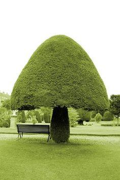 mushroom...tree