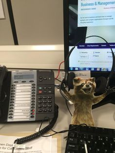 #WheresRory today, @TheBloggess? He's confirming places for University & making people #FuriouslyHappy