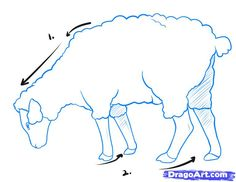How to Draw a Sheep, Step by Step, Farm animals, Animals, FREE ...