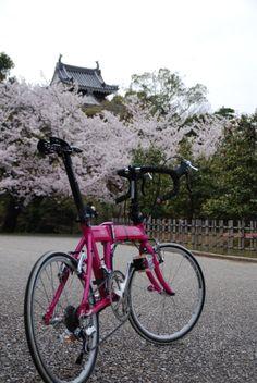 Copyright © へへ 様 / 2014 ホライズ / 愛知県の小京都と云われる、抹茶で有名な西尾市で撮影しました。西尾城×桜×ダホン