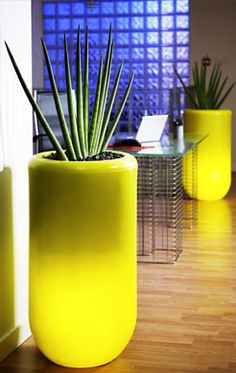 interior plant spaces that dont look kitsch or messy - Hotels Decoration