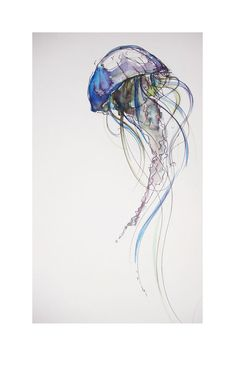 Jellyfish by photographer-amymay.deviantart.com on @deviantART