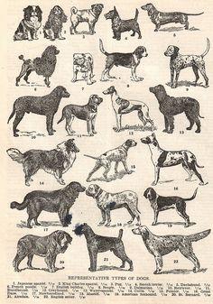 Vintage Dogs by HA! Designs - Artbyheather, via Flickr