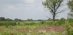 Crabtree Nature Center, Barrington Hills, IL