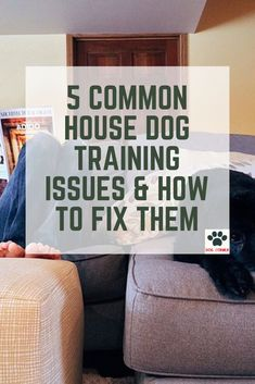 5 Common House Dog Training Issues & How to Fix Them - Dog Corner Best Dog Breeds, Best Dogs, Dog Training Tips, Potty Training, Dog Training Leads, Dog Houses, House Dog, Dog Commands, Dog Corner