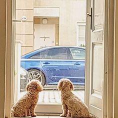 """Tapenda na Instagramie: """"Kapustę zasmażaną już mam teraz tylko szare kluski. Obiad na jutro gotowy 😜#kluski #szarekluski"""" Dogs, Animals, Instagram, Animales, Animaux, Pet Dogs, Doggies, Animal, Animais"""