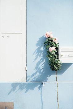 gorgeous blue w crisp white & roses Bri Emery of Design Love Fest at Jardin de Plantes in Paris | Gardenista