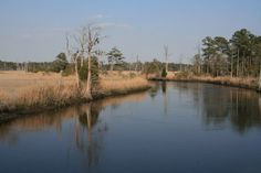 Photo by: Lori Harris Cape Fear Marsh -Southport, NC