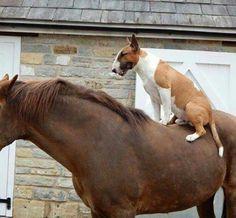 Bullterrier - my Love. Bullterrier - my Love English Bull Terrier Puppy, British Bull Terrier, Mini Bull Terriers, Miniature Bull Terrier, Bull Terrier Dog, Animals Of The World, Dogs Of The World, Best Dog Breeds, Best Dogs