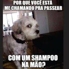 Top 26 memes engraçados hilariantes – Hilarious Jokes and Funniest Quotes Funny Animal Memes, Funny Animals, Funny Jokes, Love Dogs, Love Pet, Pet Dogs, Dog Cat, Lol, Top Memes