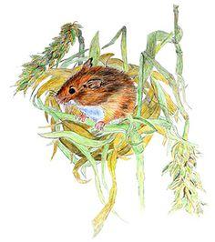 Luftige Mäusenester | Kuriose Tierwelt