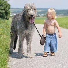 Shaggy dog and his shaggy kid.